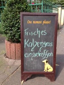 Katzengras